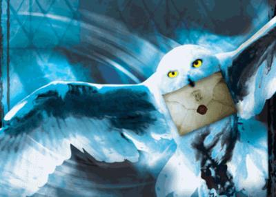 Harry Potter Fan Always